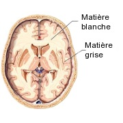 matiere grise matiere blanche