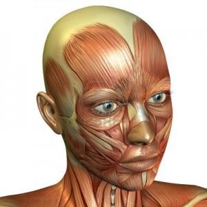 rendu-3d-des-muscles-du-visage-feminin