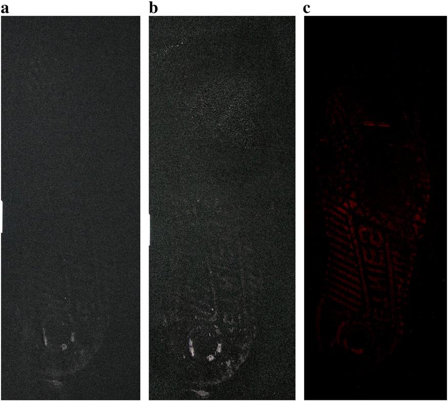 Amélioration d'une trace de sang sur nylon/lycra noir avec du LCV : a) avant amélioration b) sous lumière blanche c) avec fluorescence