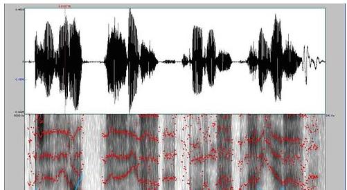Capture d'écran d'un spectrogramme généré par Batvox