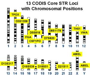 Profil génétique CODIS